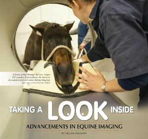 Innovations in Equine CT Scanning