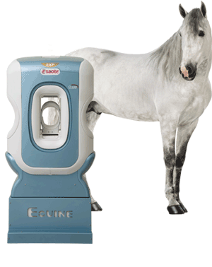 O•Scan Equine Limb MRI with horse