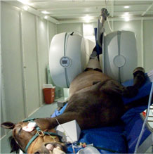 Vet-MR Grande XL in use in a rotated position